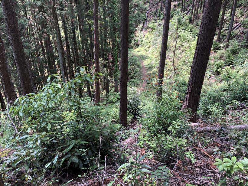 柏木山の作業道12