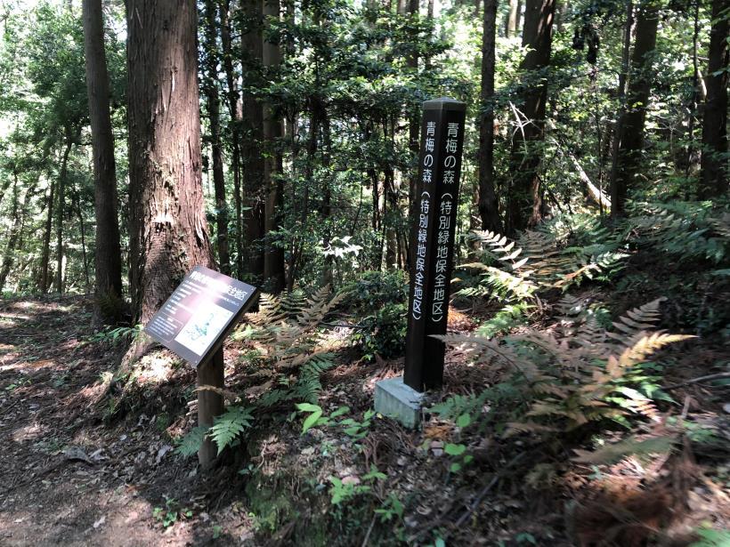 青梅の森23