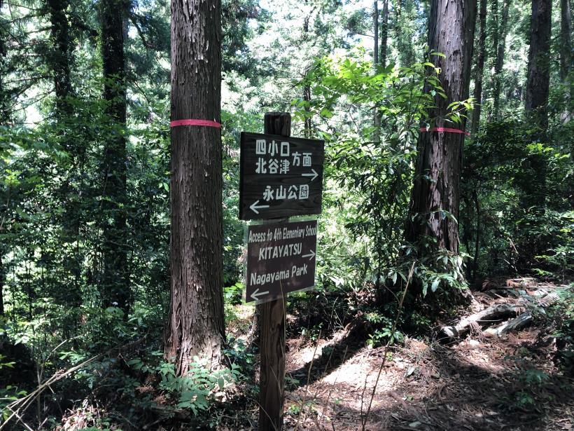 青梅の森25
