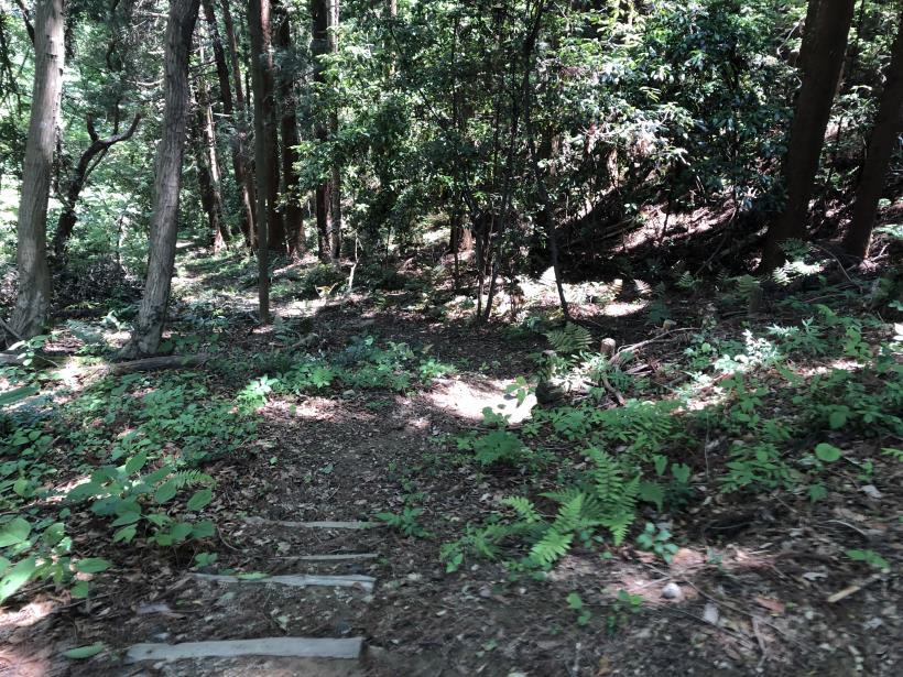 青梅の森27