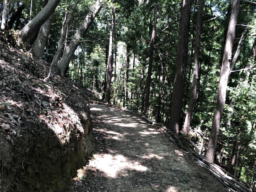 青梅の森29