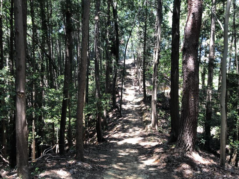 青梅の森46