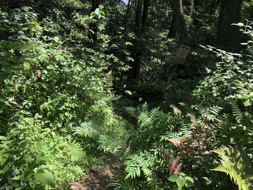 青梅の森67