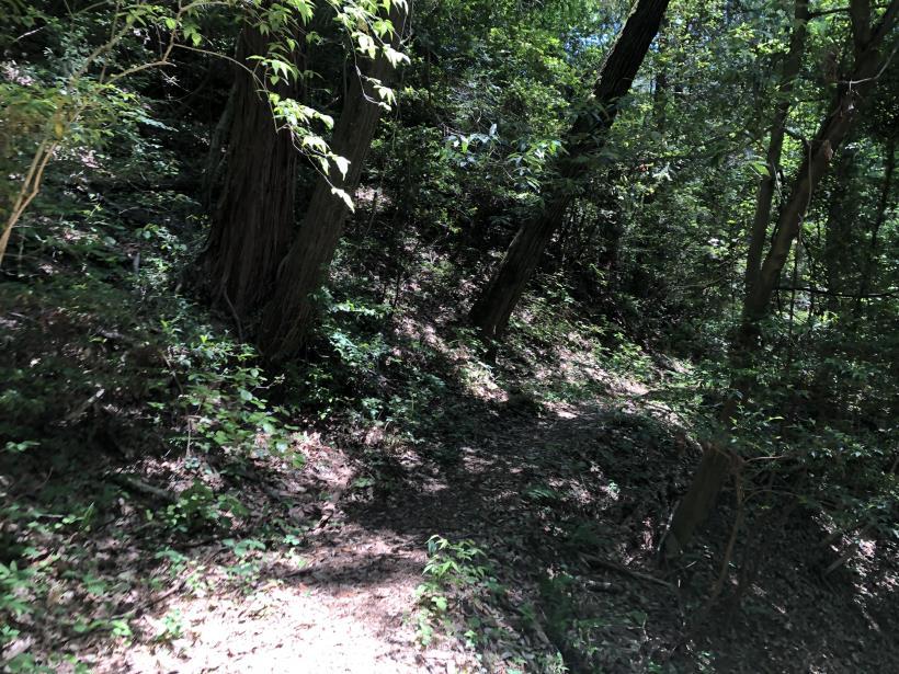 青梅の森68