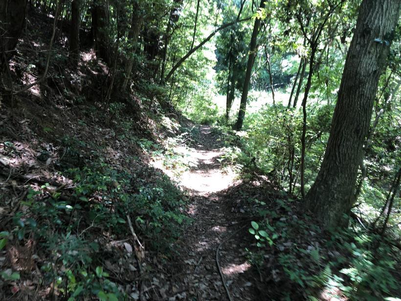 青梅の森72