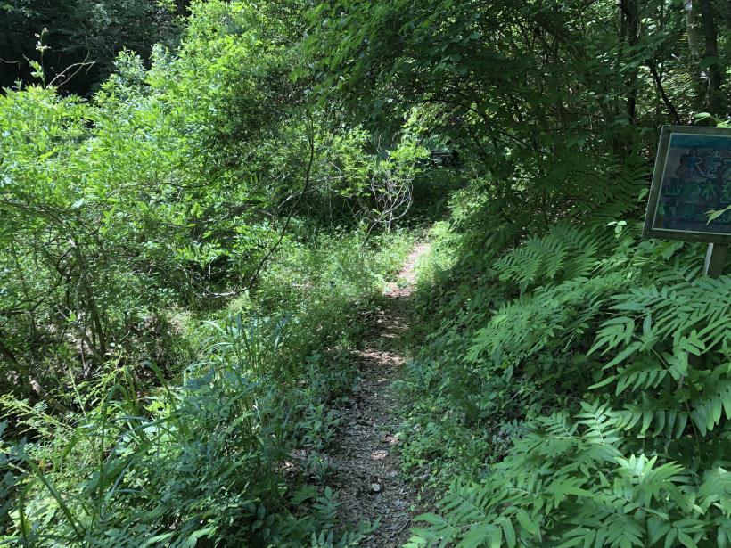 青梅の森76