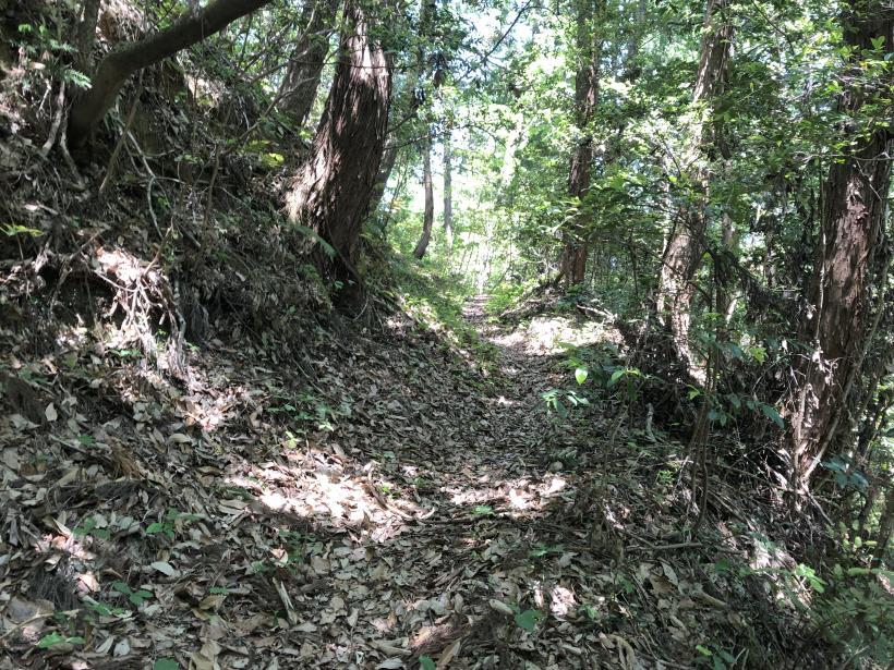 青梅の森88
