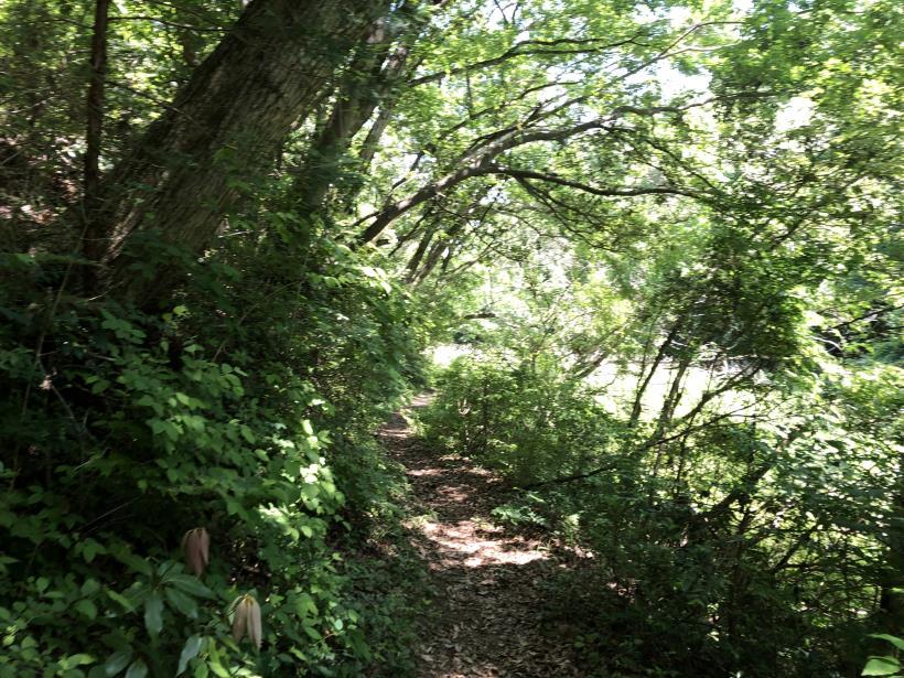 青梅の森75