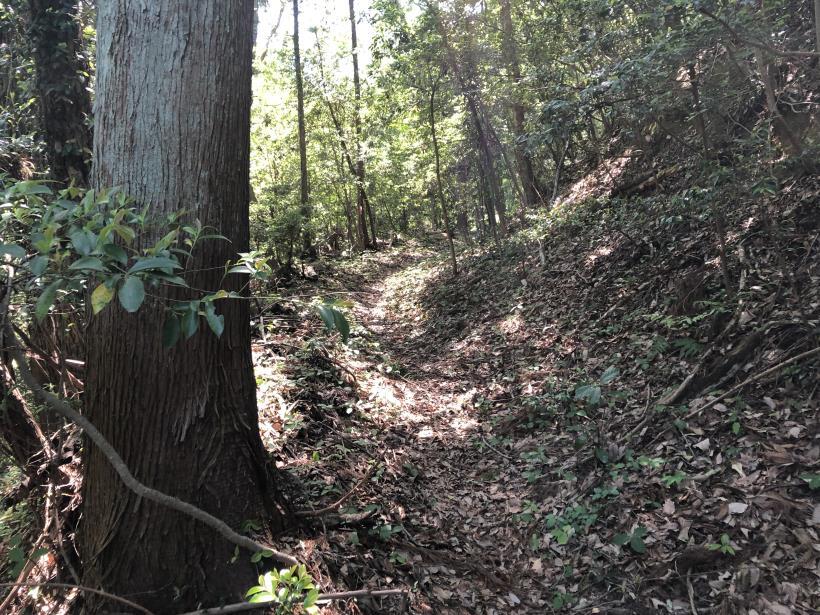 青梅の森89