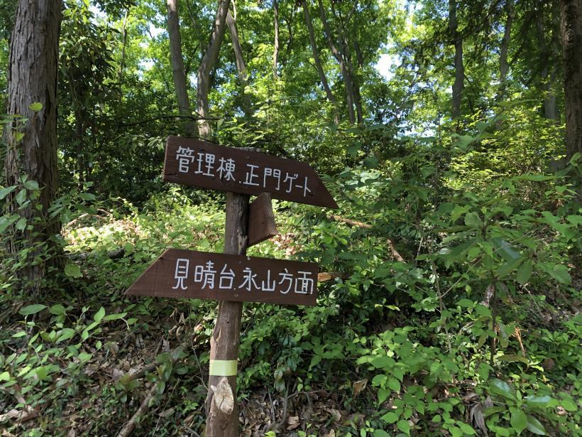 青梅の森97