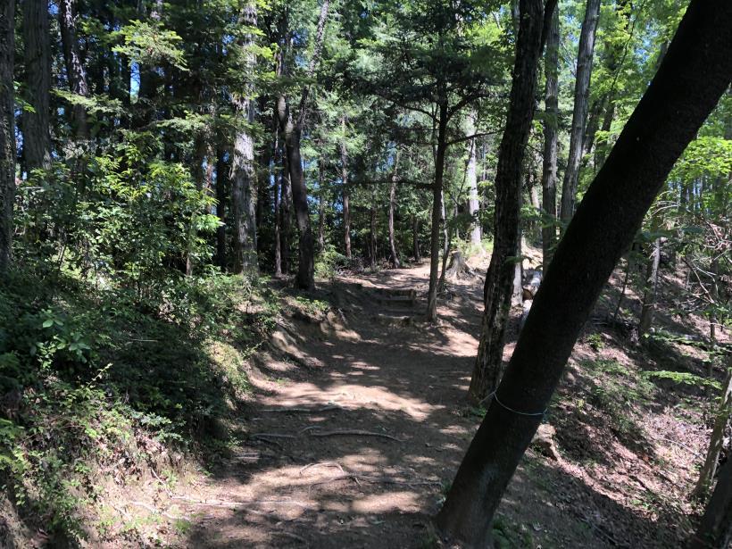青梅の森98