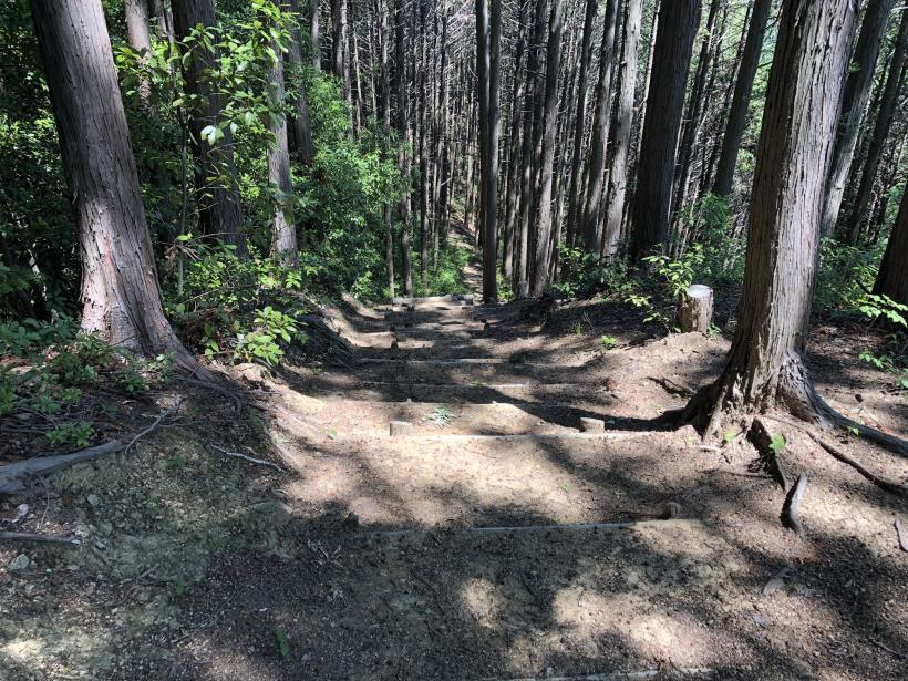 青梅の森99