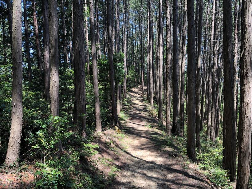 青梅の森101