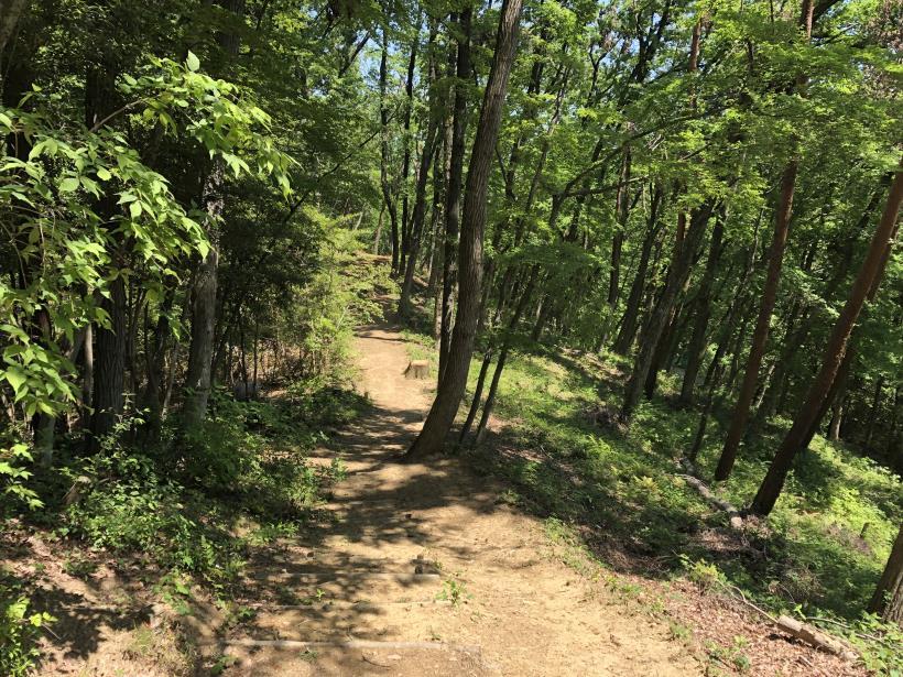 青梅の森112