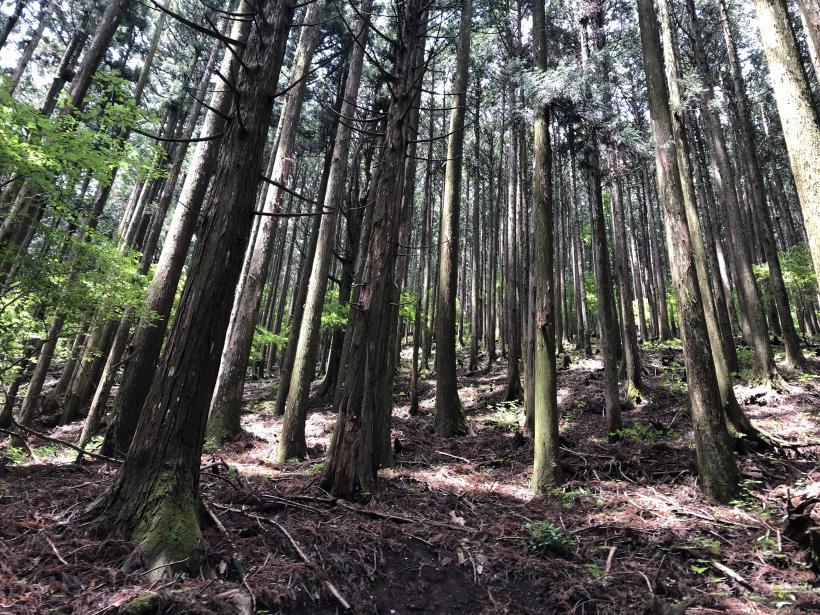 武甲山82