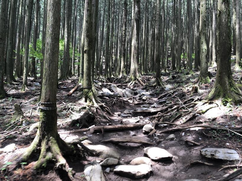 武甲山86