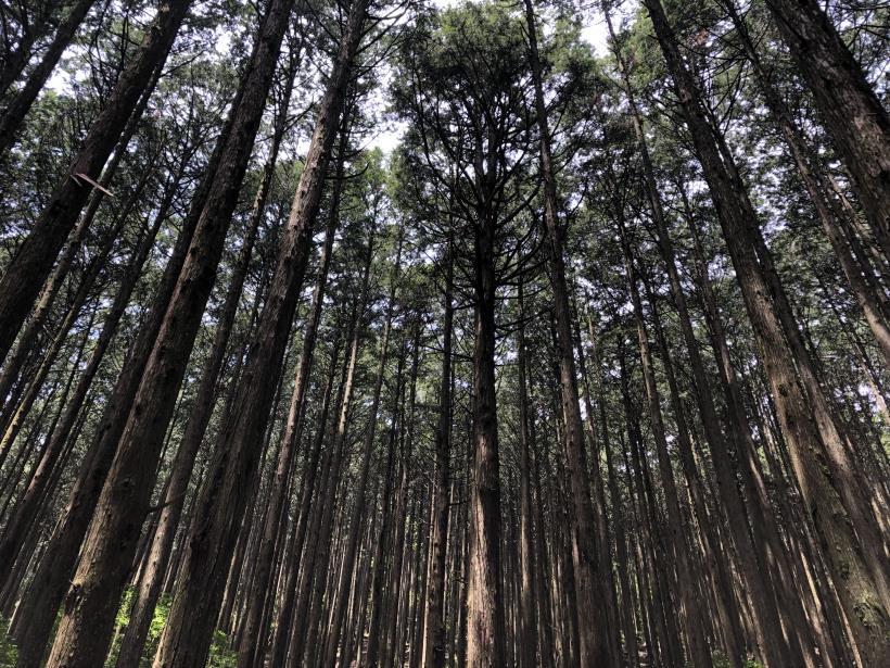 武甲山87
