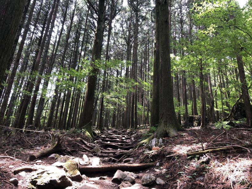 武甲山95