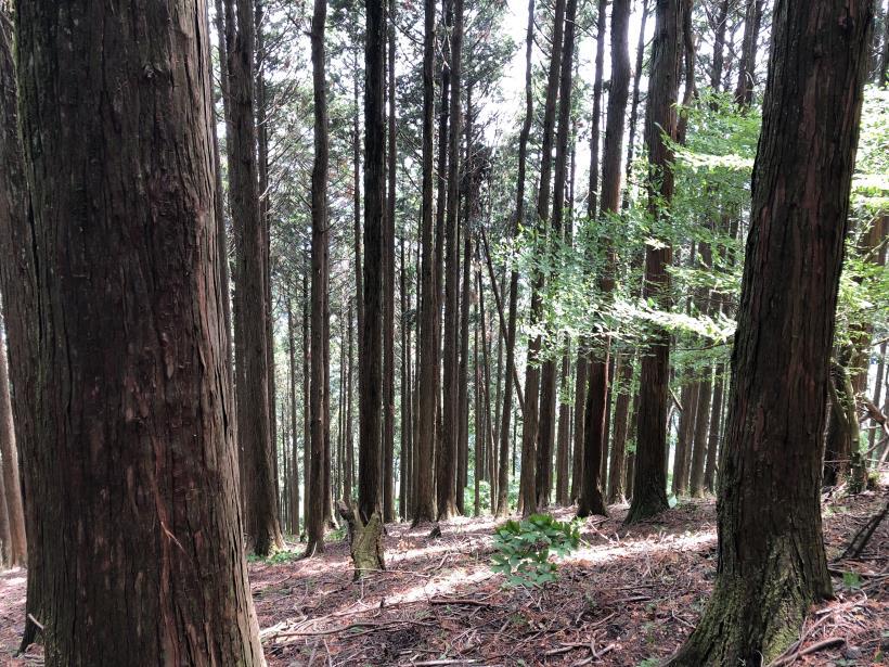 武甲山99