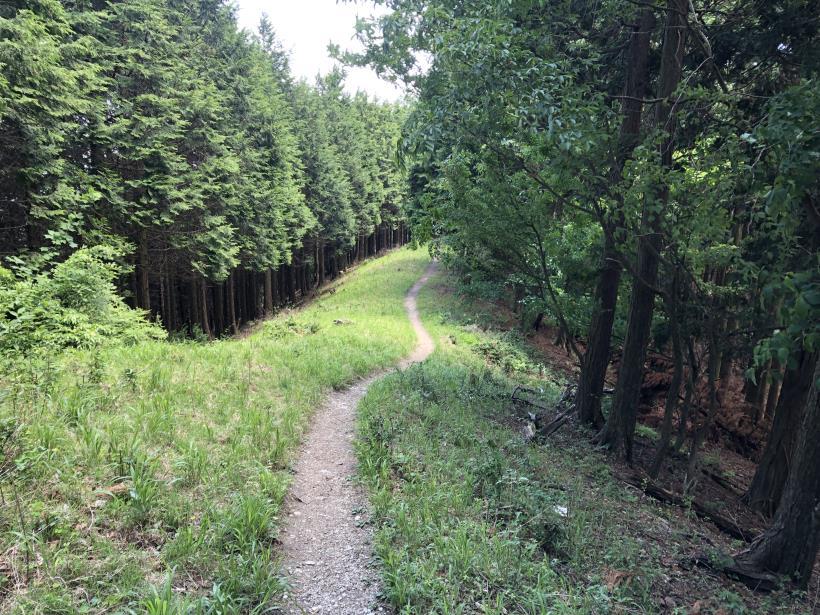 武甲山155