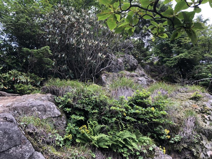 笠取山でヤラれまくる113