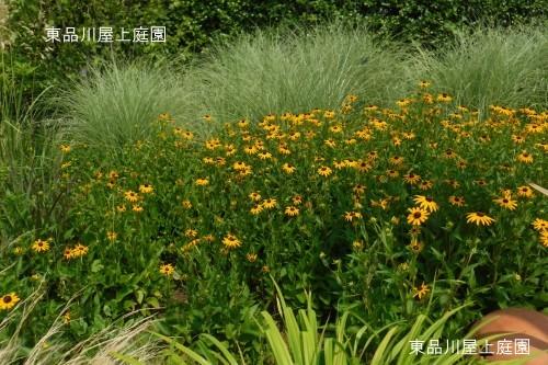DSCF1360s.jpg
