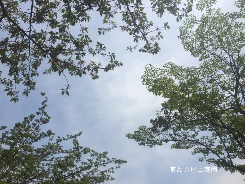 harufesu-1.jpg
