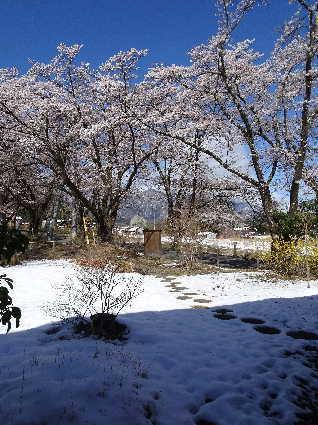 2019-04-12桜と雪