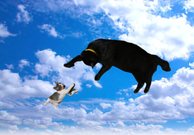ali_and_meow_diving.png