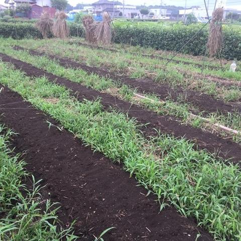 種蒔きした大豆畑