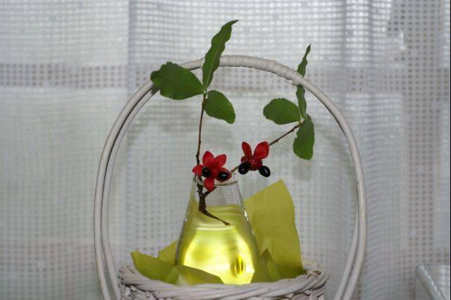花瓶に挿したミッキーマウスの木 (2)
