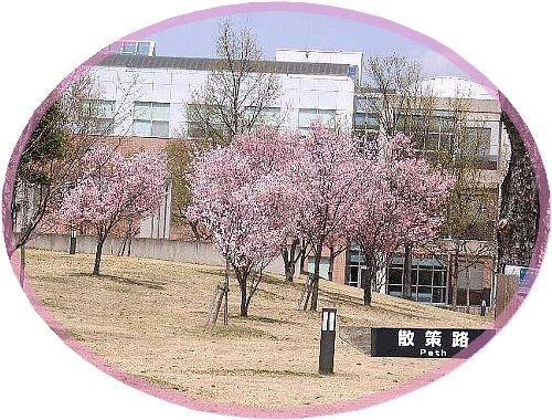春の会津大学構内005