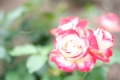 DSCF0434_s.jpg