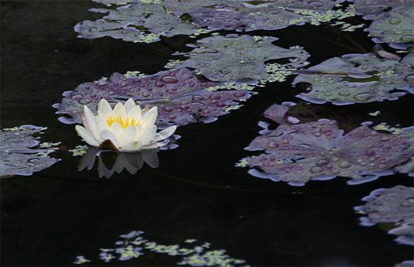 190608-02.jpg
