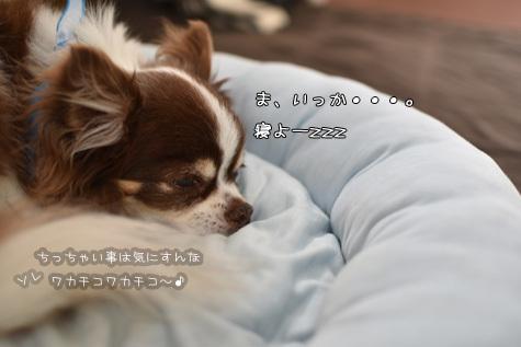 DSC0265190703.jpg