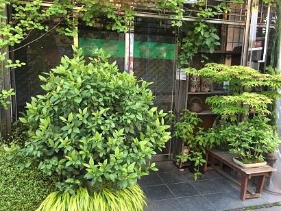 店先を飾る植物@高円寺#2