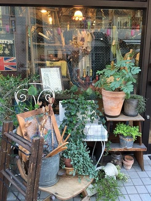 店先を飾る植物@高円寺#3