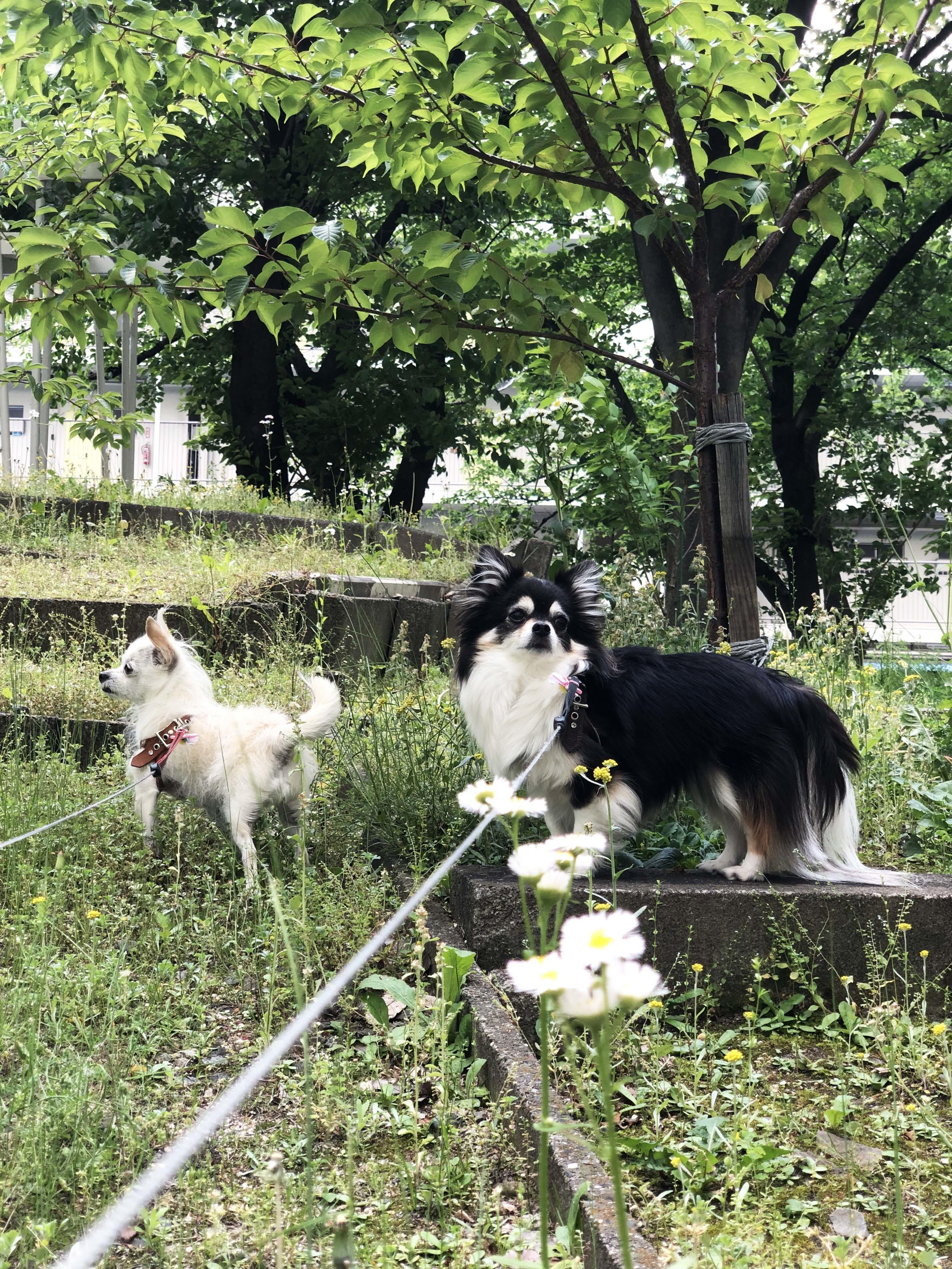 1904姉妹_散歩にて01