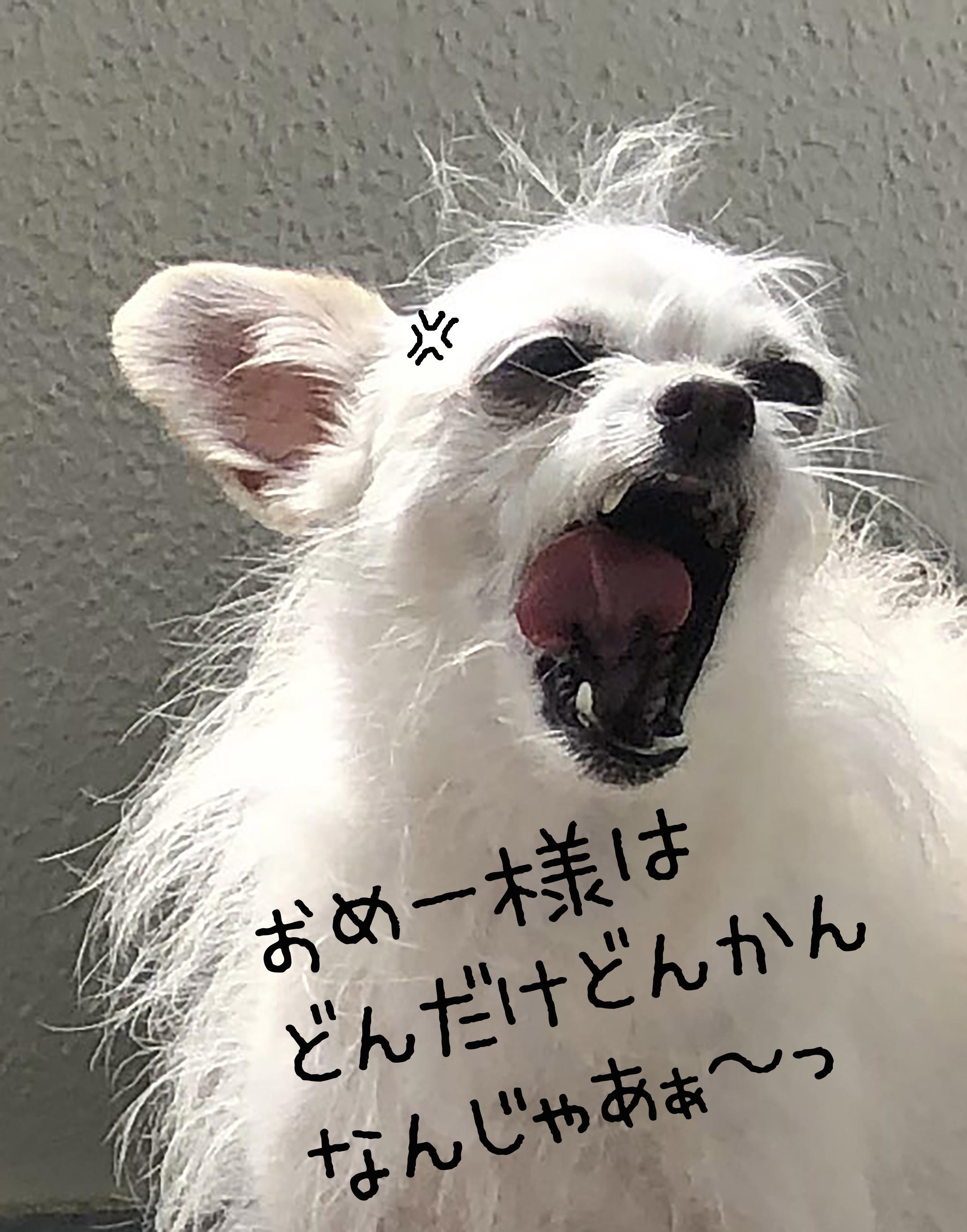 1908こゆ文句03_2