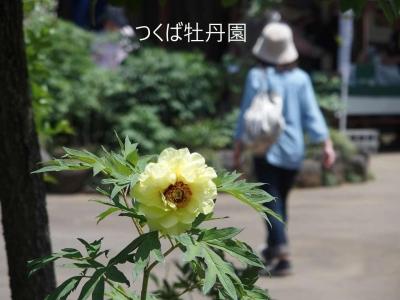 mini_2211_botan_P5162034.jpg