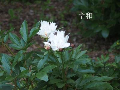 mini_2215_reiwa_P5162009.jpg