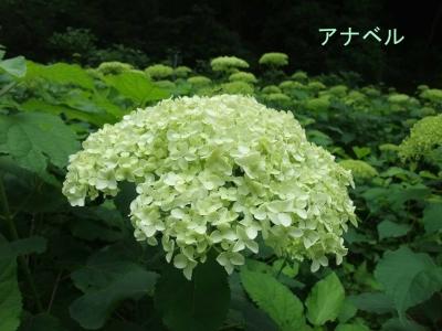 mini_3356_anaberu_DSCF5578.jpg