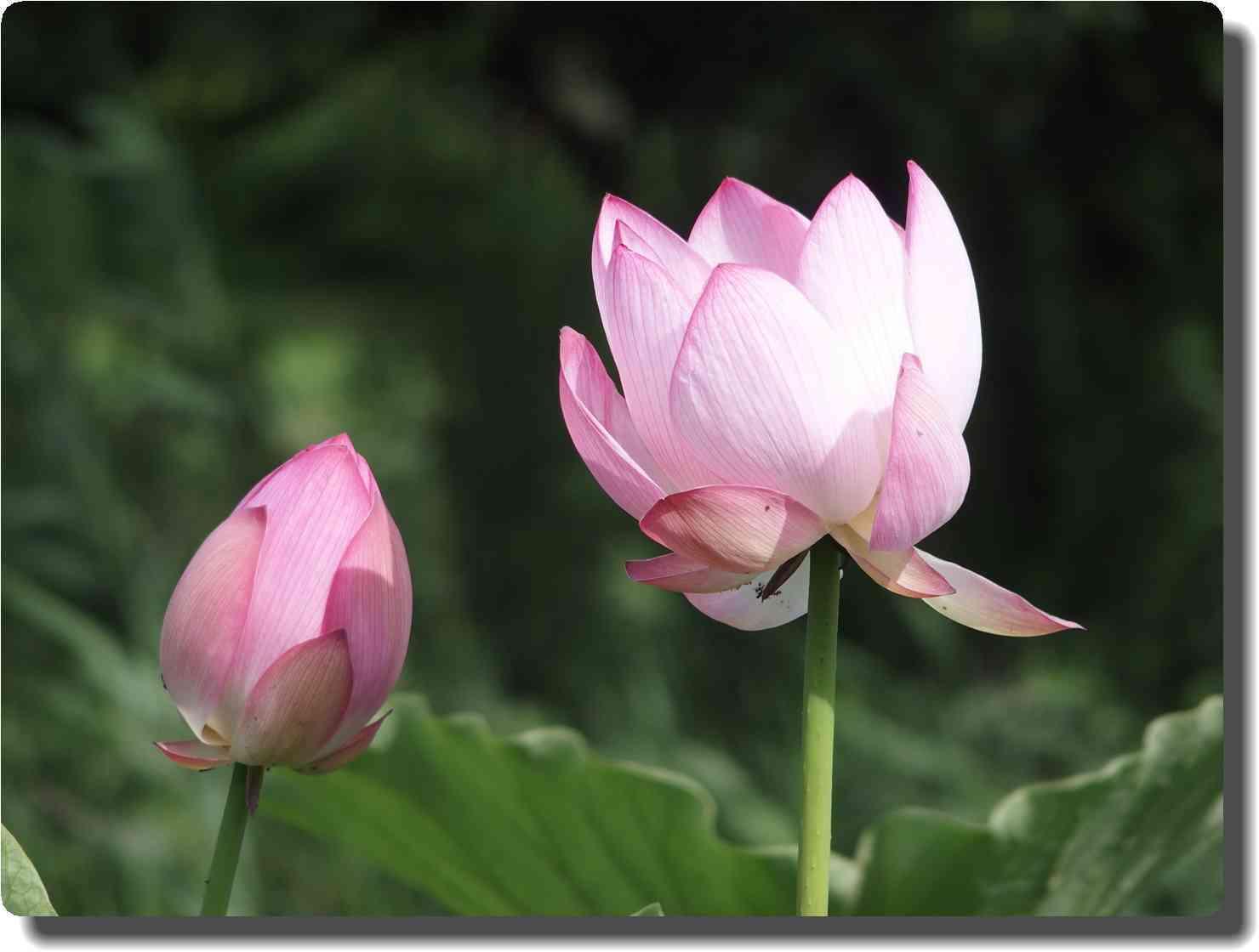 mini_6617_pink_P7284622.jpg