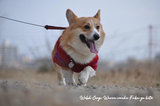 超ロング散歩