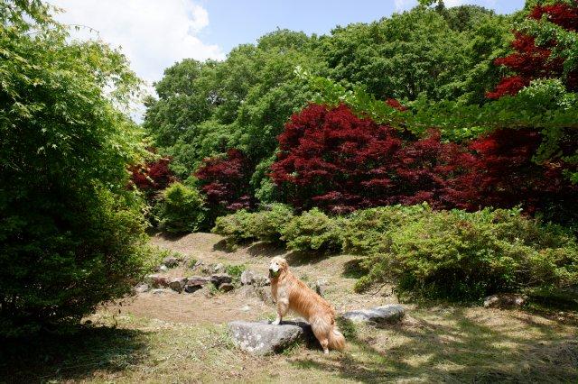 花園渓谷 2019-6-4 038