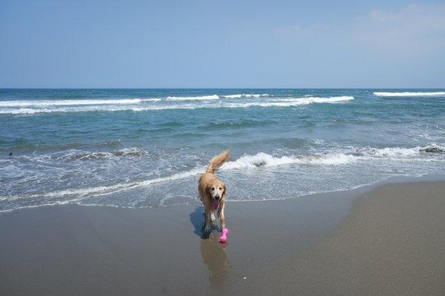 鹿島灘海浜公園 2019.6.26 028