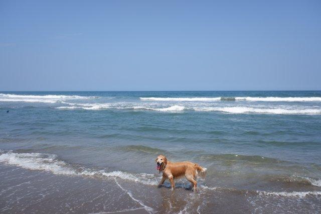 鹿島灘海浜公園 2019.6.26 037
