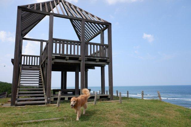 鹿島灘海浜公園 2019.6.26 088