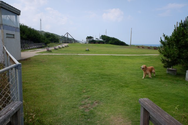 鹿島灘海浜公園 2019.6.26 093