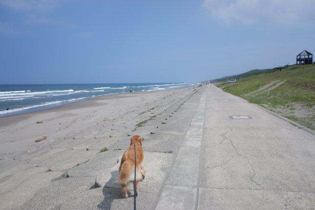 鹿島灘海浜公園 2019.6.26 097